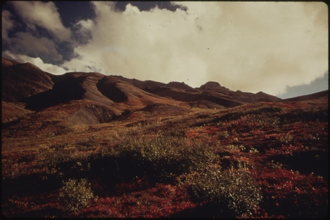 Brilliant Autumn Colors on the South Side of the Atigun River Five Miles Inside the Gorge. View Looks South 08/1973