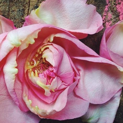 Kelly Connor Sunrose Yoga// roses